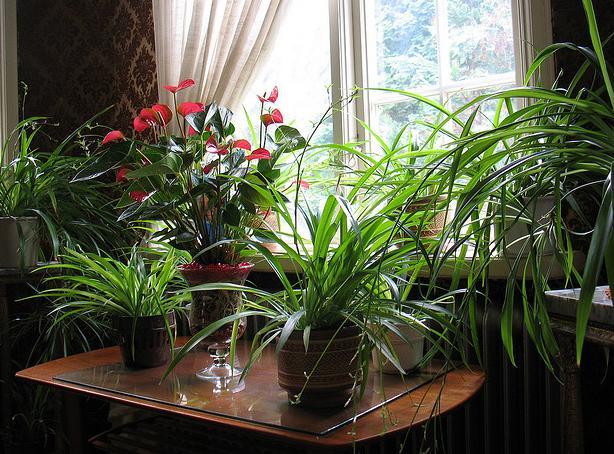 Цветы комнатные в доме